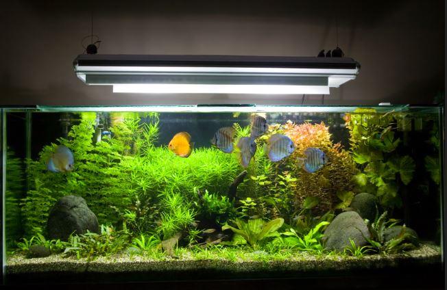 home aquarium with lights