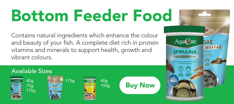 Bottom feeder pleco fish aquarium food