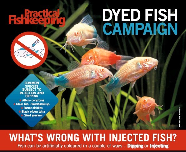 Dyed Fish Campaign poster