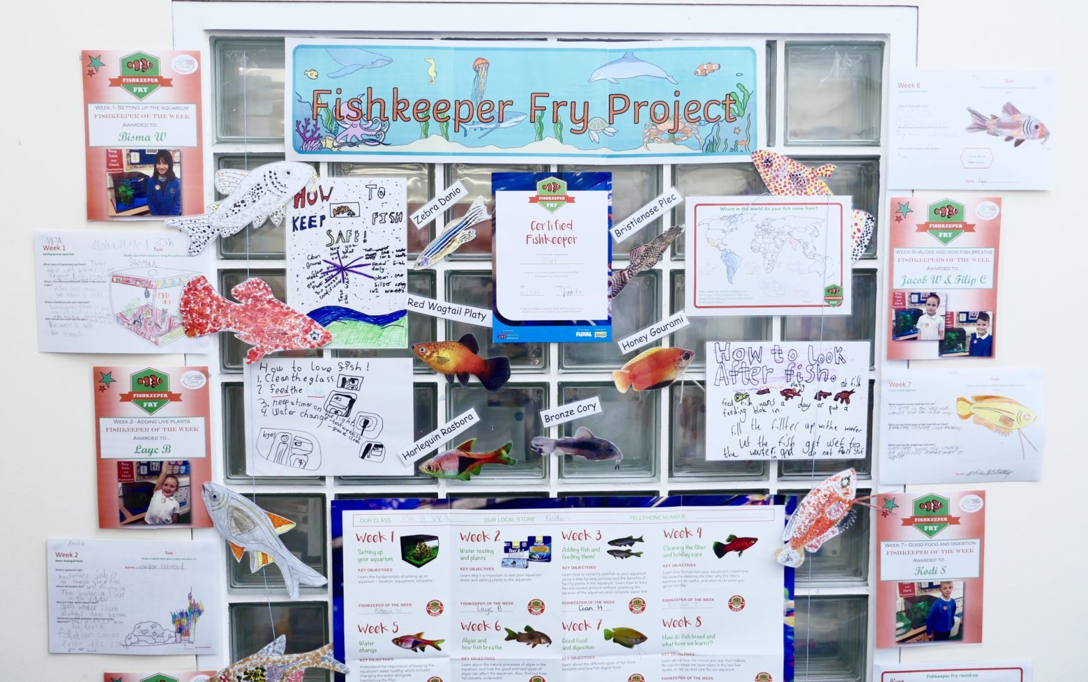 Fishkeeper Fry classroom display