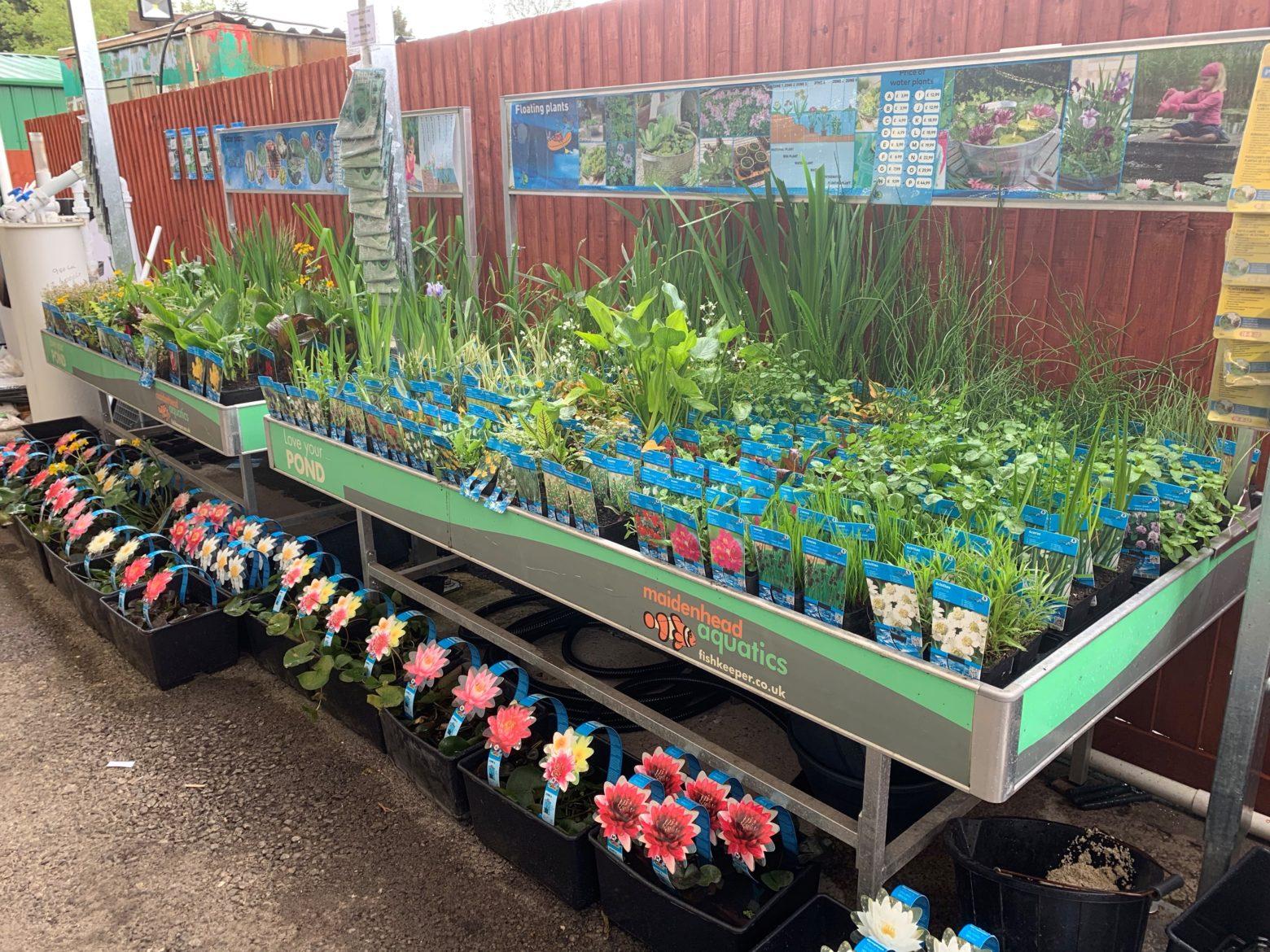Aquatic plants and Cwmbran store