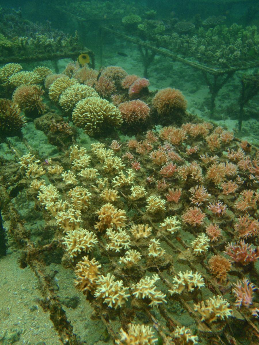 green corals