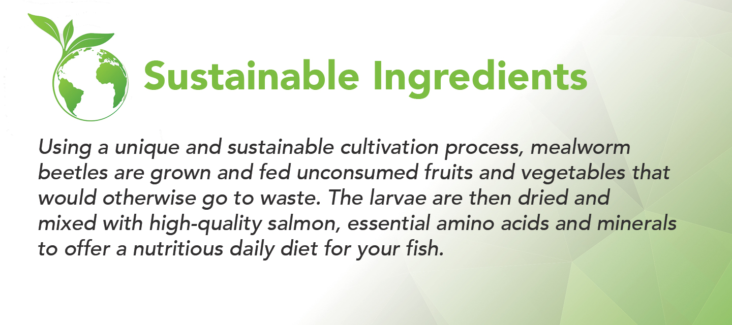 Sustainable fish food mealworm growth