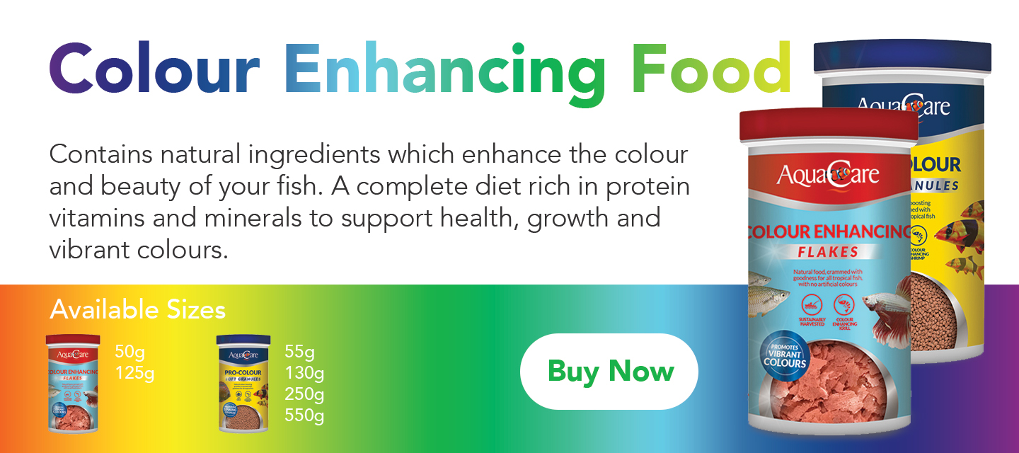 colour boosting rich protein fish food