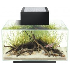fluval edge 23 litre designer desktop aquarium