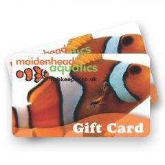 giftcard, maidenhead aquatics, clownfish