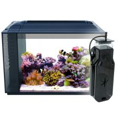 sea evo glass aquarium with clownfish and decor
