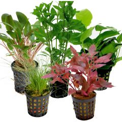 Tropical Aquarium Plant Pack- Deluxe