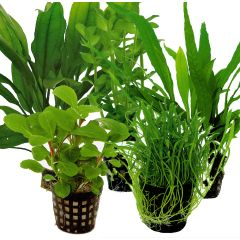 Tropical Aquarium Plant Pack- Premium