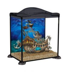 Black, sea pirate child marina aquarium
