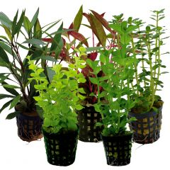 Tropical Aquarium Plant Pack- Basic