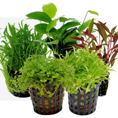 Tropical Aquarium Plant Pack- Foreground