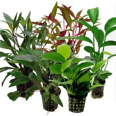 Tropical Aquarium Plant Pack- Special