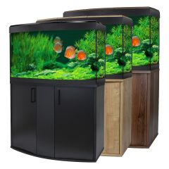 fluval bow front tropical aquarium with discus and 3 colours