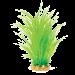 Hugo Mizu Cyperus Helferi. Aquarium plant with base.