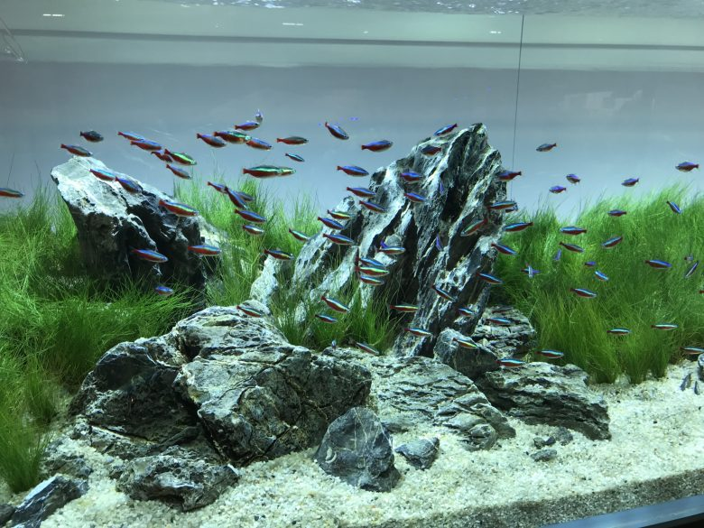 The Art Of Aquascaping