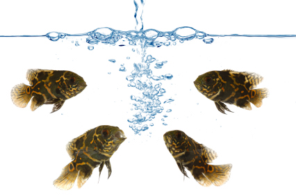 R O water – the best solution for your aquarium