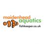 'Most improved Maidenhead Aquatics livestock', 2005