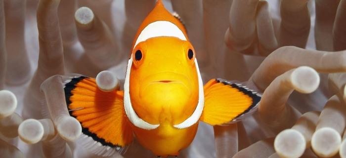 Pet Supplies Confident Electric Siphon Vacuum Clean Water Aquarium Fish Tank Gravel Cleaner Pump Filter Products Hot Sale Fish & Aquariums